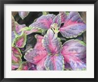 Framed Purple Flowering Plant