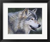 Framed Timber Wolf Dark