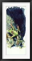 Framed Costa Rican Frog