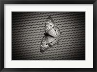 Framed Butterfly Contrast