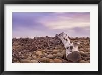 Framed Driftwood View