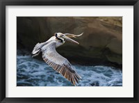 Framed Pelican Flight