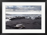 Framed Black Sand Honu