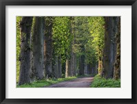 Framed Light Green Forest Road