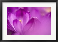 Framed Purple Flower Study
