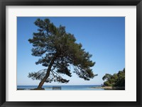 Framed Tree At The Sea