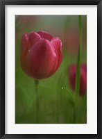 Framed Tulip No 2