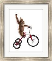 Framed Monkeys Riding Bikes #2