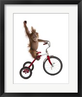 Framed Monkeys Riding Bikes #2