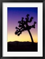 Framed Joshua Tree I