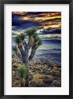 Framed Joshua Tree Sunset