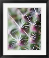 Framed Cactus III
