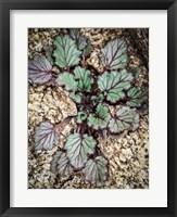 Framed Desert Rock Plant