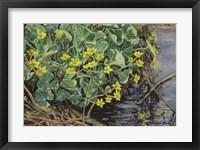 Framed Marsh Marigolds