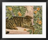 Framed Caribbean Cat