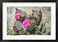 Framed Pink Desert Flower