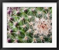 Framed Cactus I