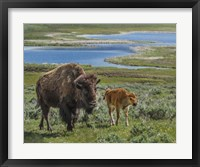 Framed Bison Cow and Calf