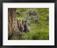 Framed Sow and Cubs Family