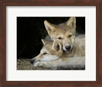 Framed Wolf Pup Brothers
