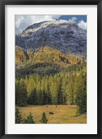 Framed Bison Grazing In The Yellowstone Grand Landscape