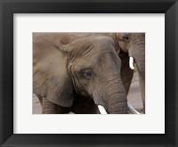 Framed Elephants 2