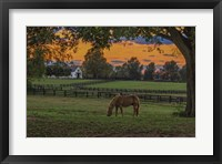 Framed Horse Farm Sunset