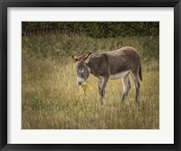Framed Young Burro