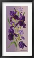 Framed Study In Lavender