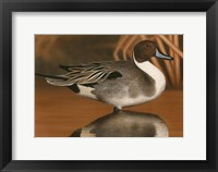 Framed Northern Pintail III