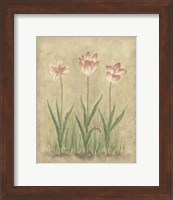 Framed Blooming Tulips I