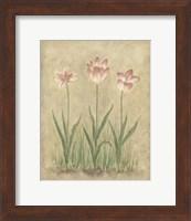 Framed Blooming Tulips I