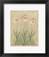 Blooming Tulips I Framed Print
