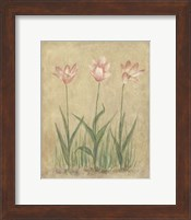 Framed Blooming Tulips II