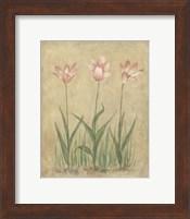 Framed Blooming Tulips II