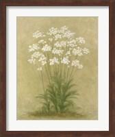Framed Floral E