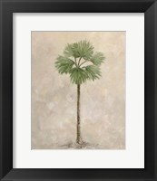 Framed Palm Tree 3