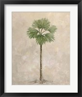 Palm Tree 3 Framed Print