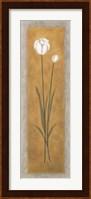 Framed Tall White Tulip
