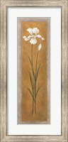 Framed Tall White Iris