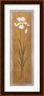 Framed Tall White Iris