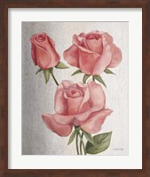 Framed American Classic Rose