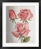 Framed American Classic Rose