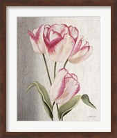 Framed Parrot Tulips