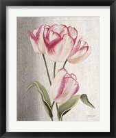 Framed Parrot Tulips
