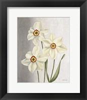 Framed Spring Narcissus