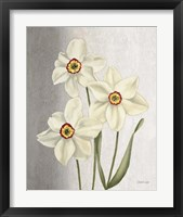 Framed Spring Narcissus