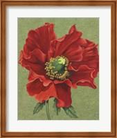 Framed Red Poppy 2