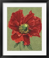 Framed Red Poppy 2