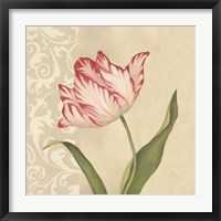 Framed Cream Tulip